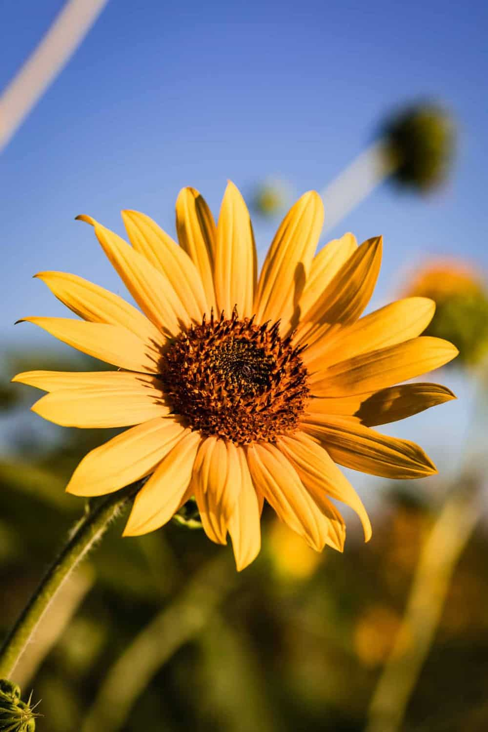 A bright yellow-orange flower in the sunlight.