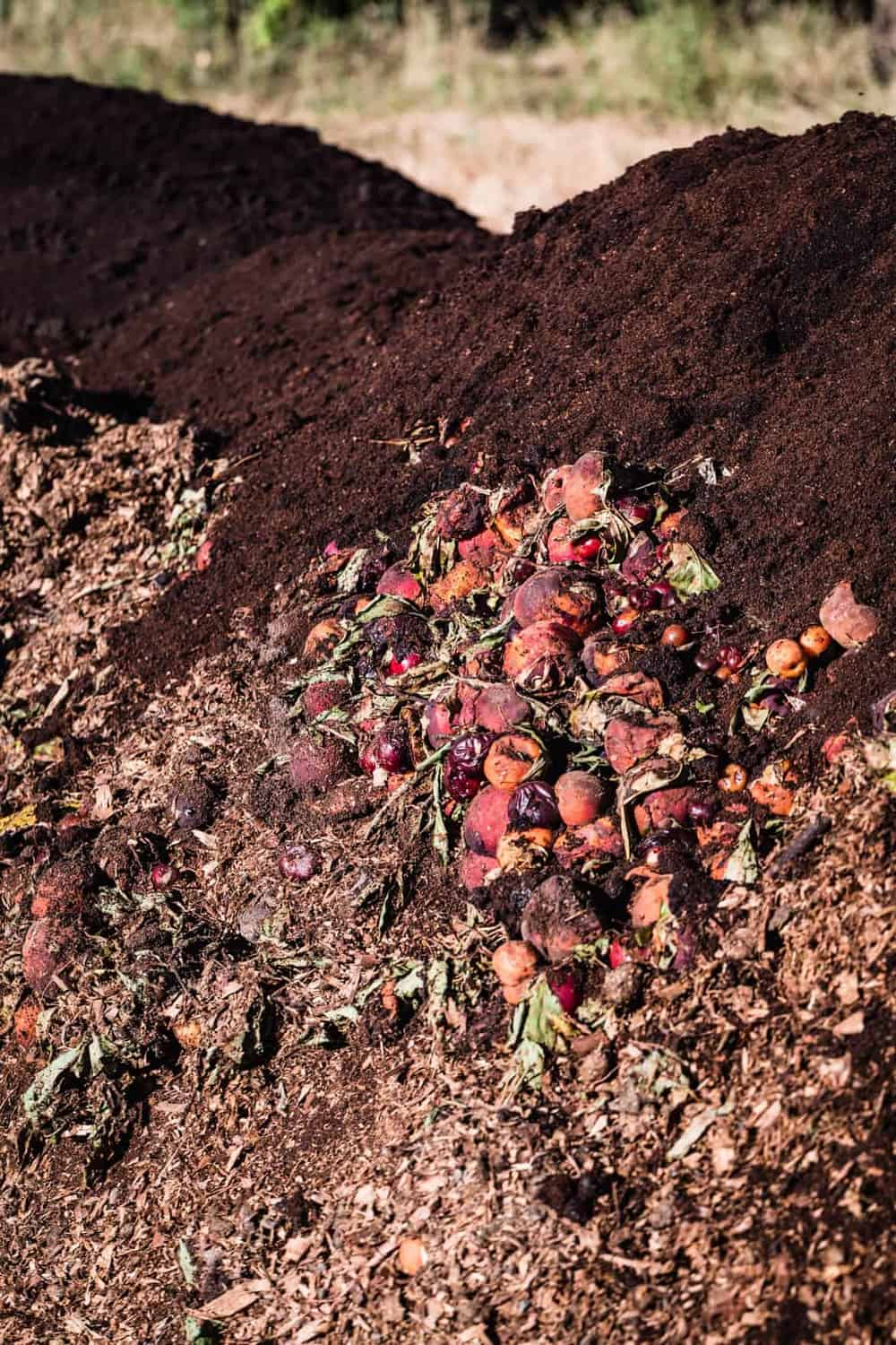 Frog Hollow Farms compost pile of organic fruit.