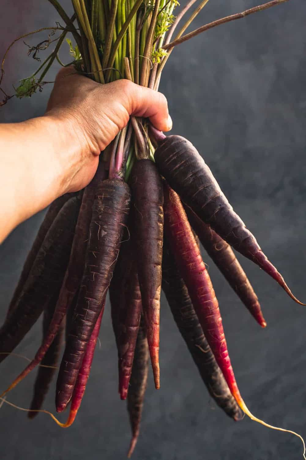Holding a bunch of purple carrots, with a grey background.