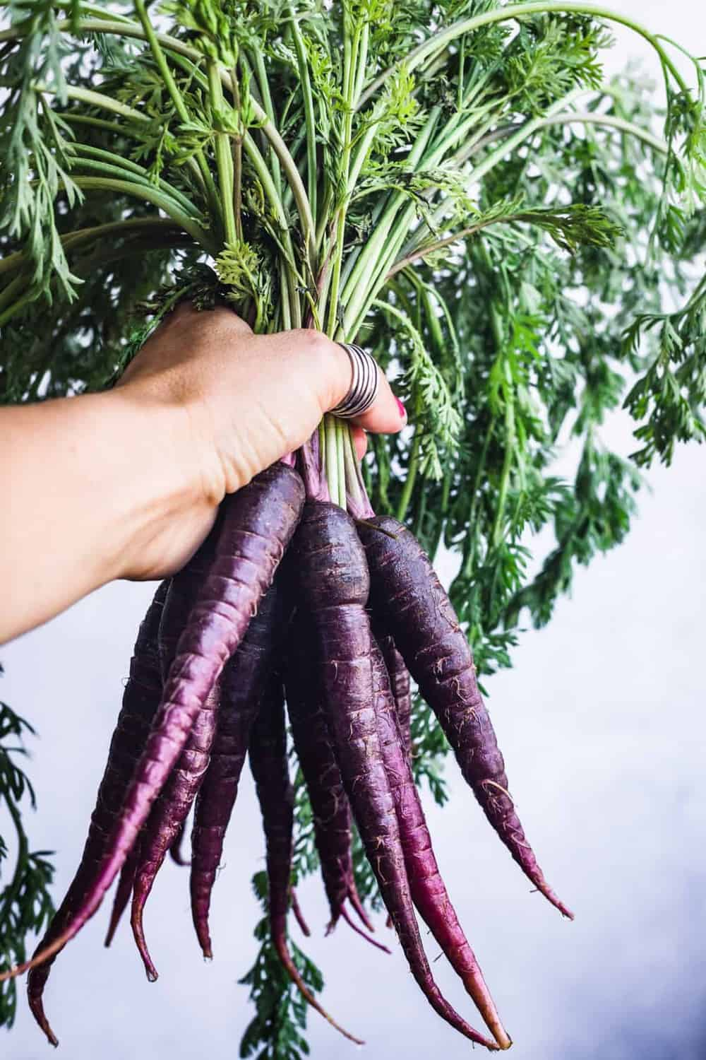 Holding purple dragon carrots, on a blue/white background.