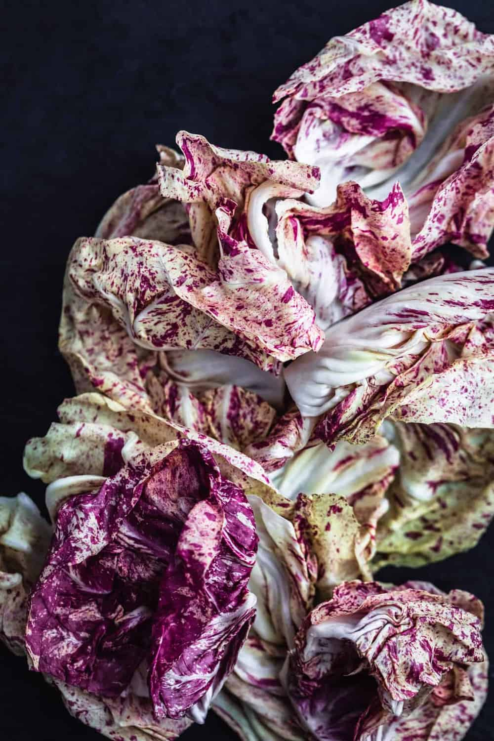 Ingredient shot of castelfranco chicory.