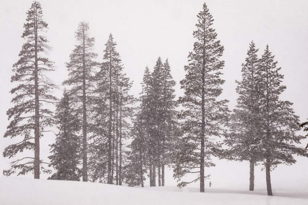 Trees on the snowy mountains of Squaw Valley.