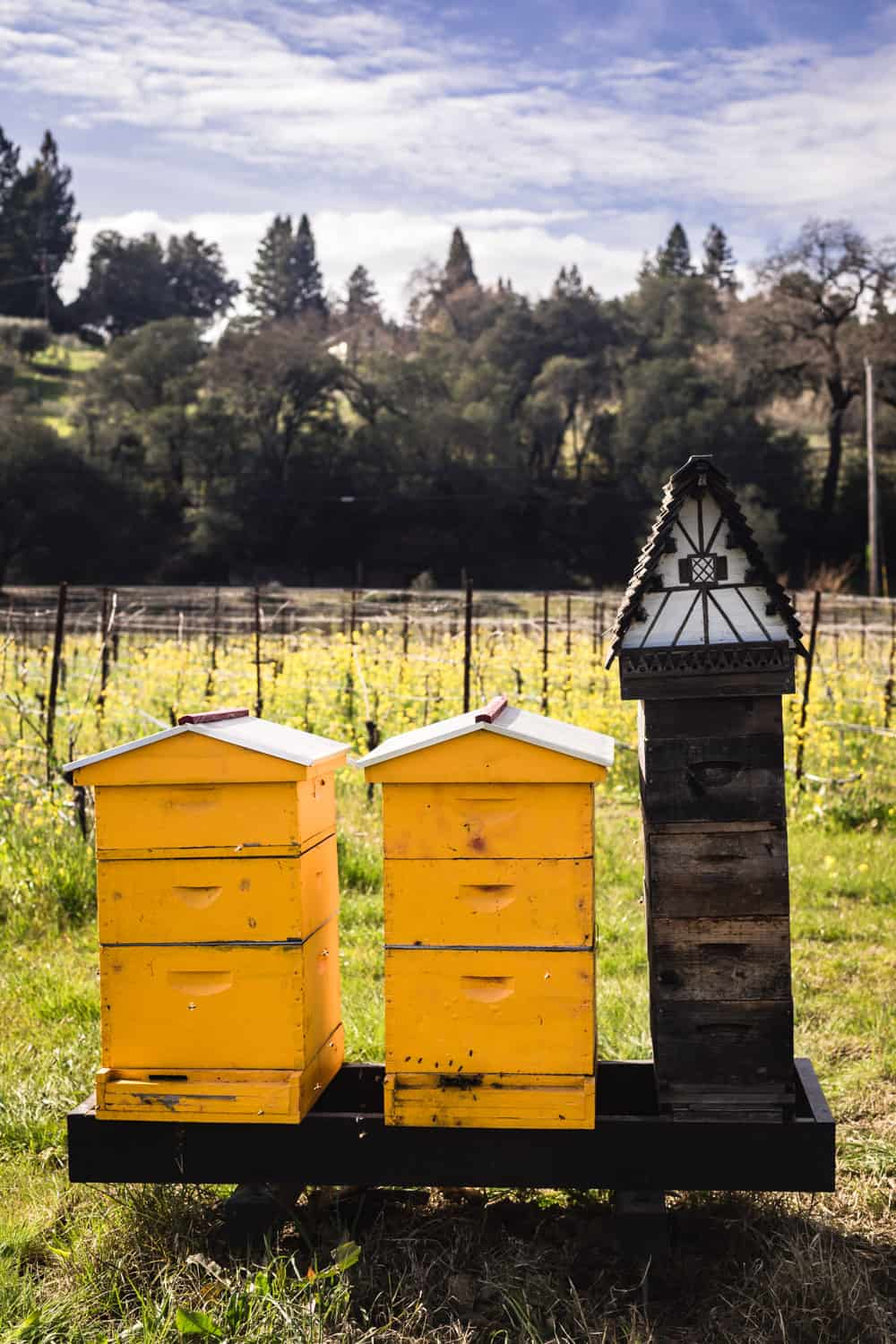 Bees being kept at Davero's biodynamic farm and winery.