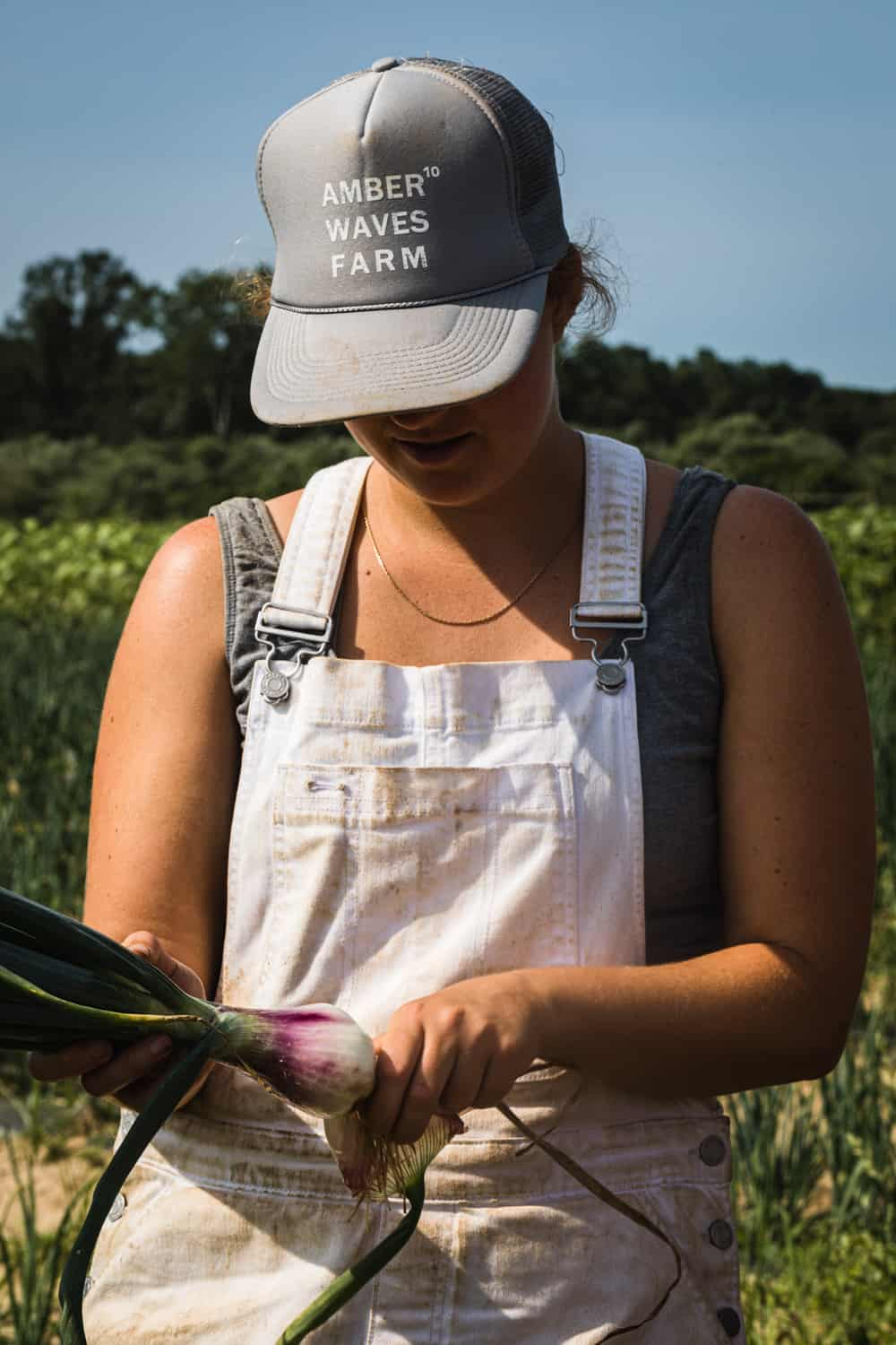 Amber waves staff harvesting onions.