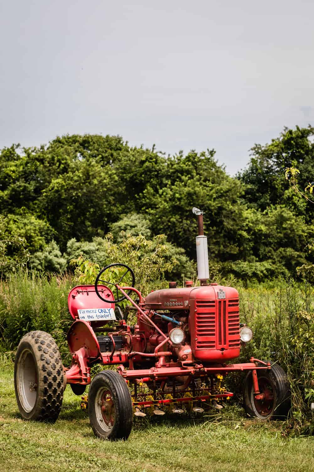 Red tractor in the fields of Amber Waves farm.