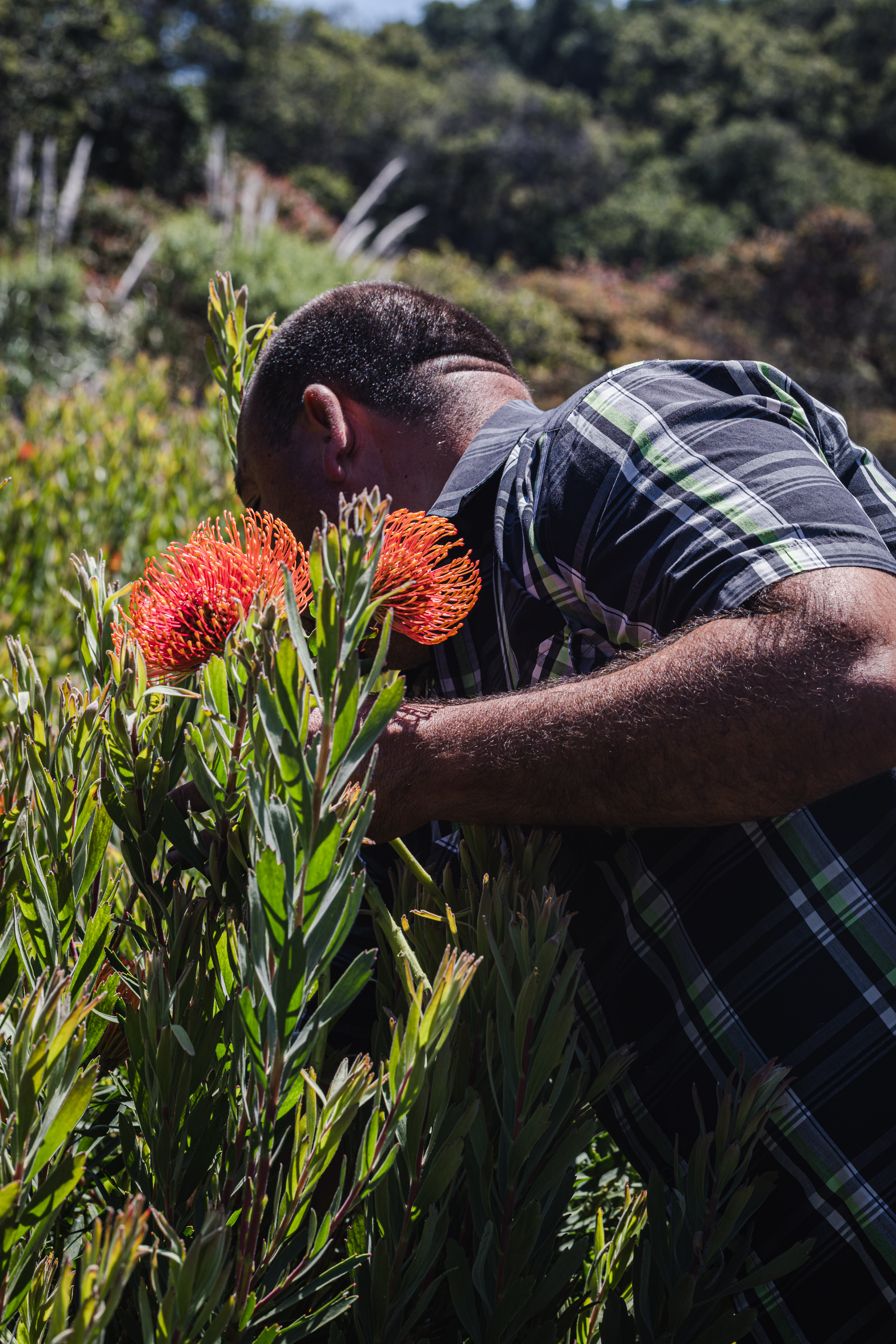 JSM Organics founder Javier Zamora picking fresh flowers.