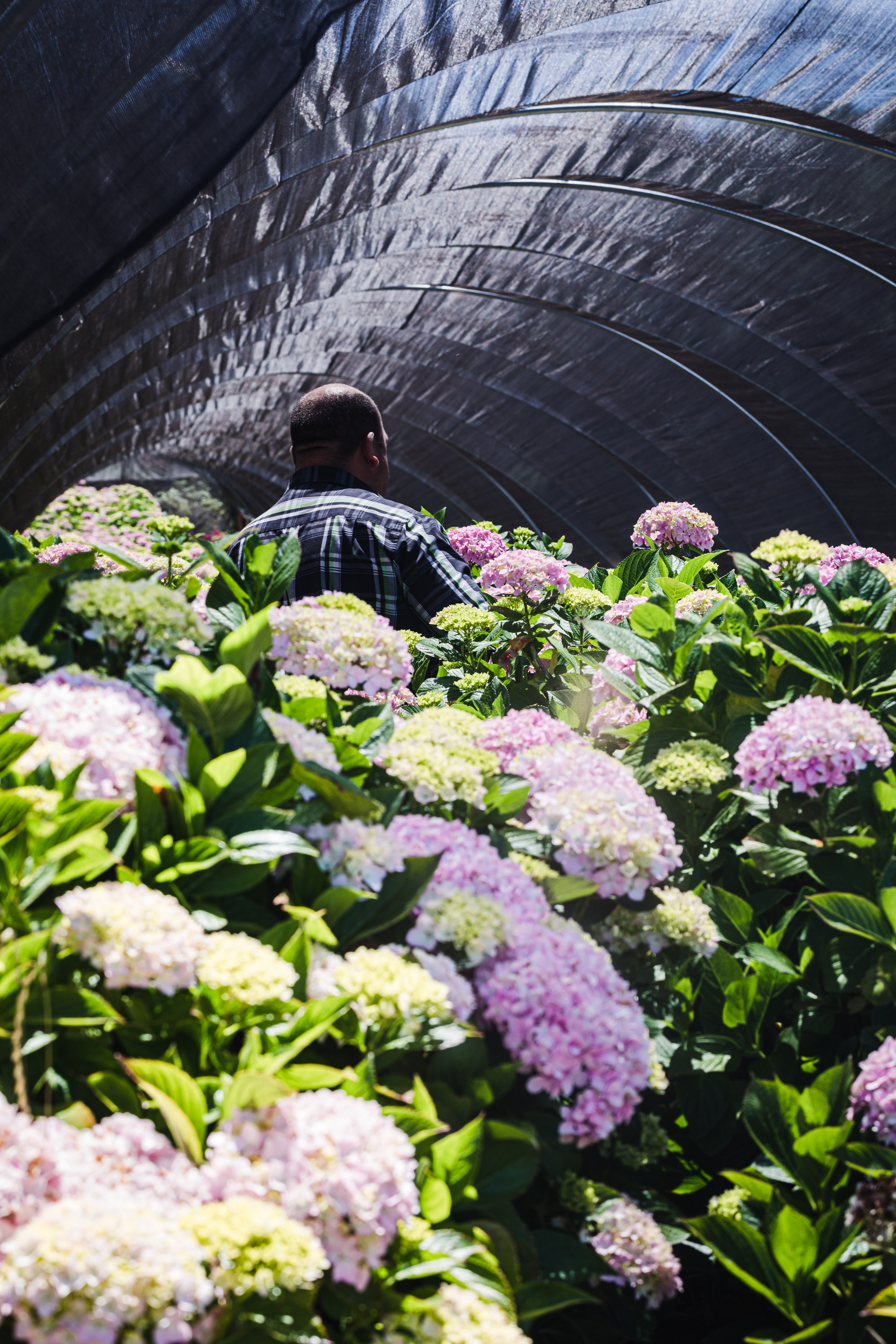 Javier Zamora, of JSM Organics, walking through freshly growing flowers.