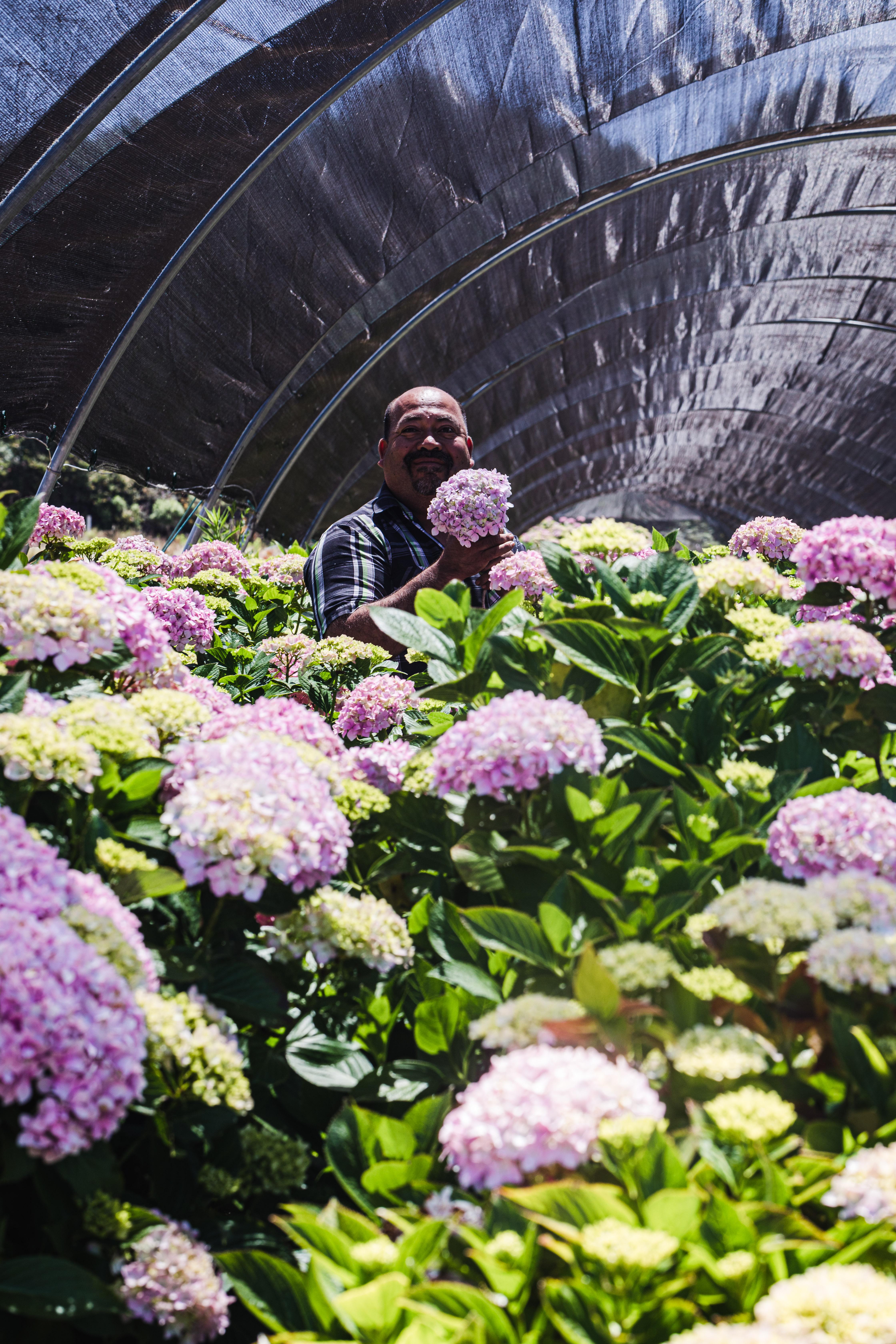 Scenes from JSM Organics flower growing operation with founder Javier Zamora.