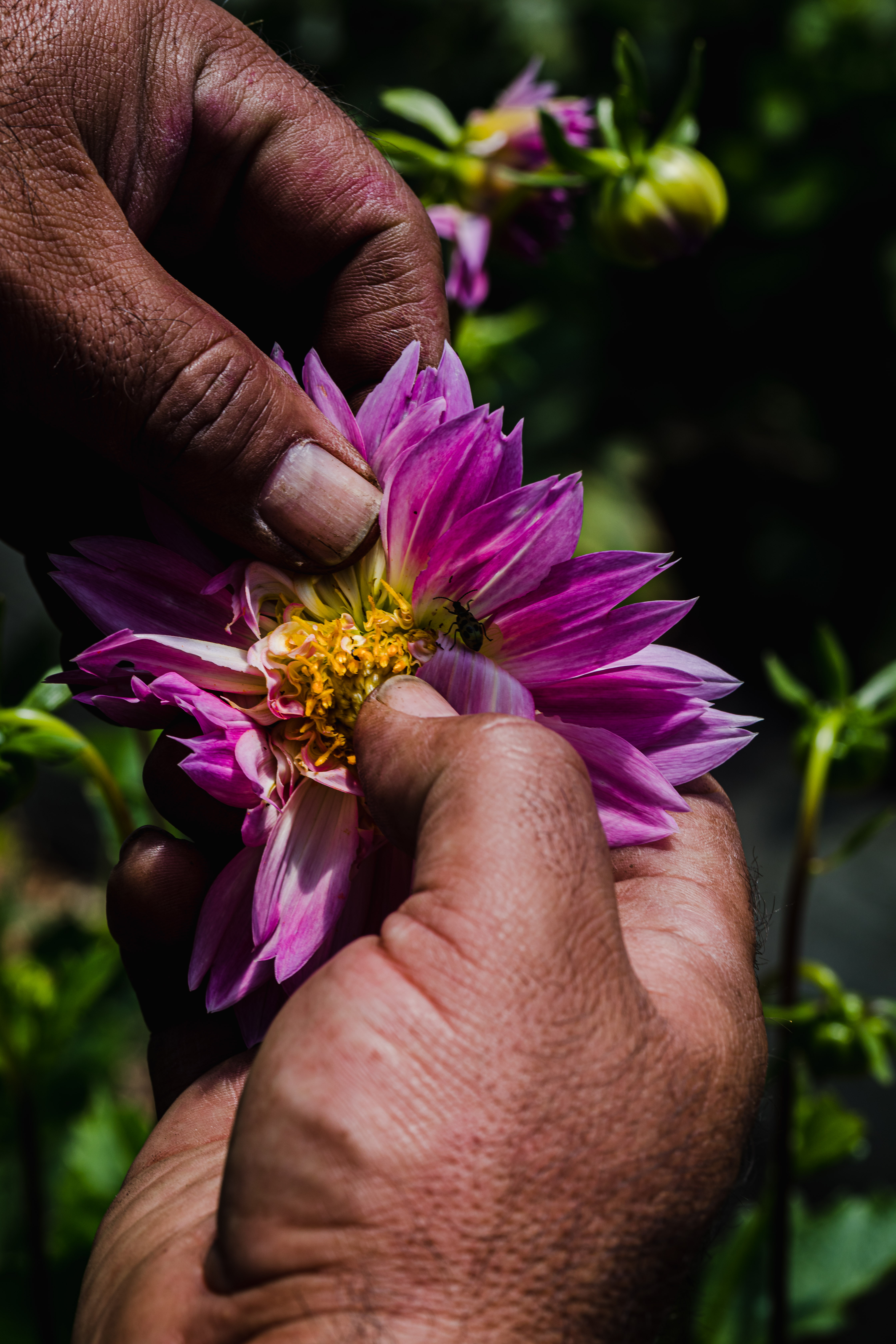 JSM Organics founder, Javier Zamora, showing off the bees pollinating their fresh flowers.