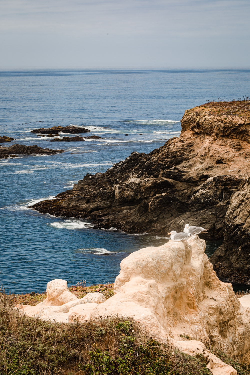 Birds parched on the cliffs at Mendocino Headlands State Park.