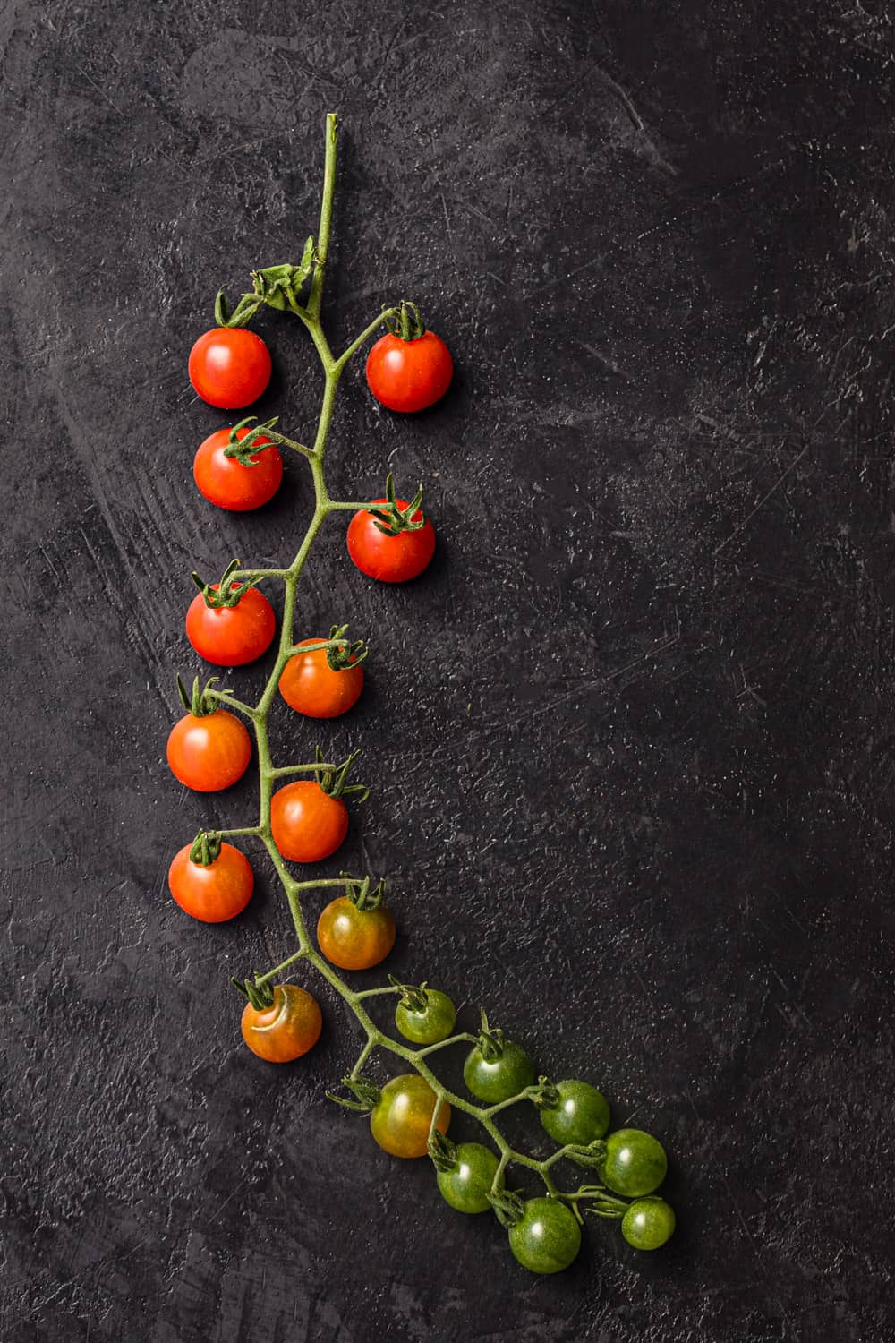 A vine with heirloom cherry tomatoes in different colors! The tomatoes colors range from Red to green.