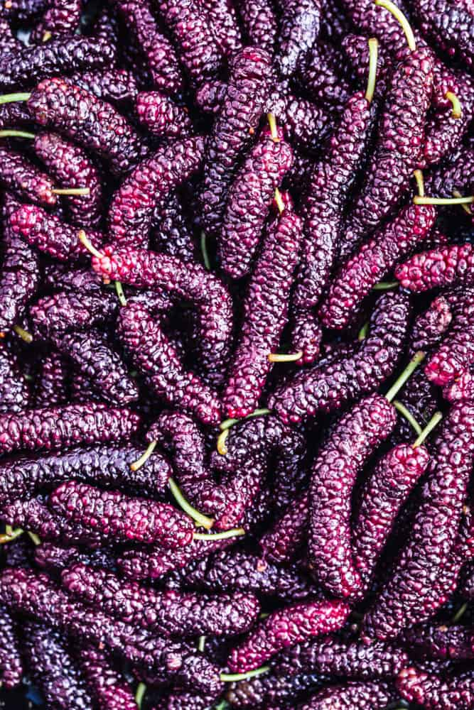 Overhead shot of fresh mulberry bounty! Frame is filled with mulberries and you cant really see their texture.