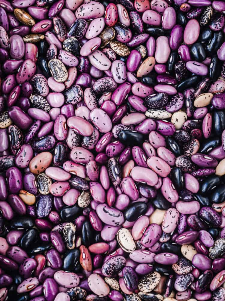 Legumes! Overhead shot of purple dried scarlet runner beans.