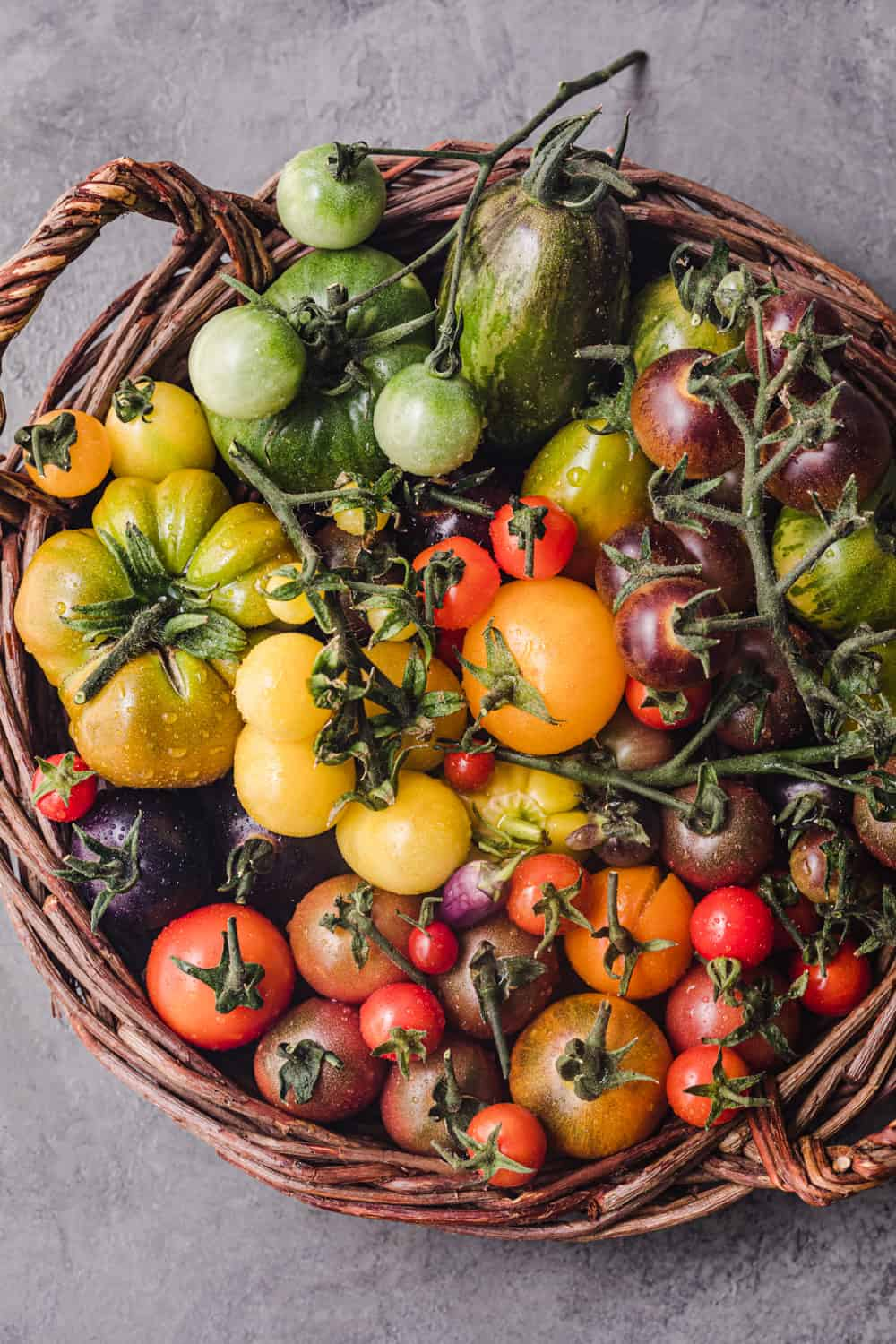 A basket filled with different shapes, sizes and colors of heirloom tomatoes. These colorful heirloom tomatoes are in every color of the rainbow! Overhead shot.