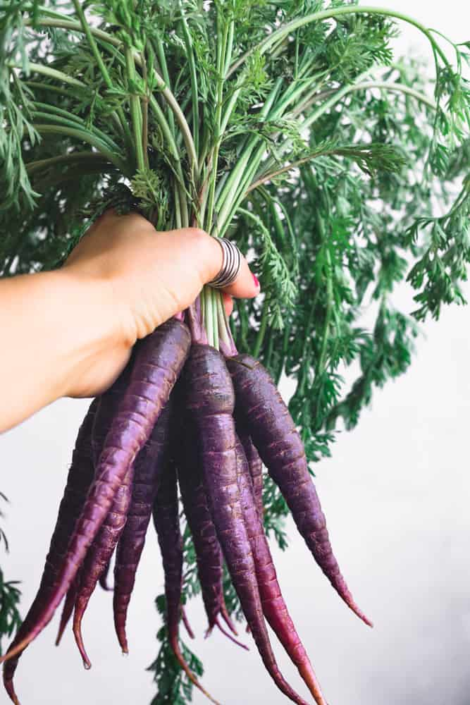 Food Photographer Daniela Gerson holding a bunch of purple carrots on a white background