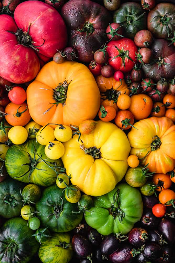 Rainbow cherry and heirloom tomatoes in red, orange, yellow, green and purple.